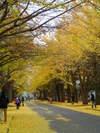 20091103_at_hokkaido_university
