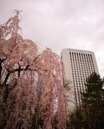20190502-nakajima-park-11