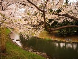 20190502-nakajima-park-12