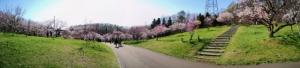 20190503-hiraoka-park-9