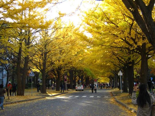 20111103_hokudai1_3