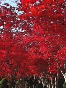 20121111_hiraoka_2