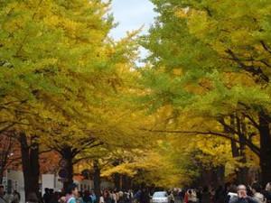 20131102hokudai_autumn4