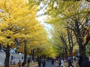 20131102hokudai_autumn5