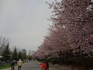 201405gw_hanameguri01
