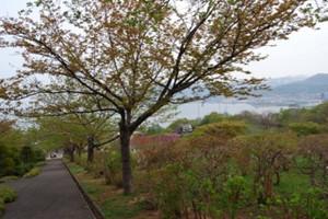 20150503_otaru_6