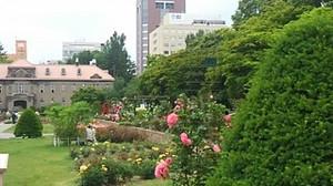 20170701_odori_rose_garden_2