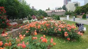 20170701_odori_rose_garden_3