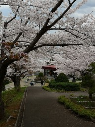 20180504_nakajima_parktemiya_park_4