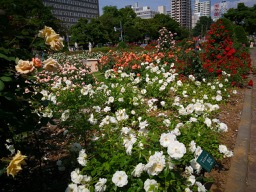 20180630_rose_garden_10