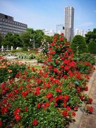 20180630_rose_garden_12