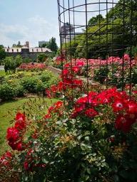 20180630_rose_garden_3