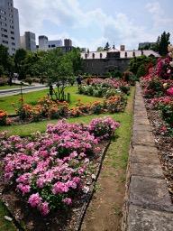 20180630_rose_garden_6