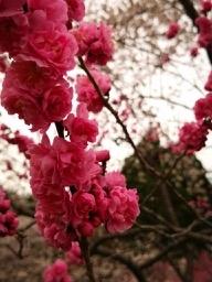 20190430-sapporo-flowers-19