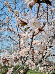 20190430-sapporo-flowers-3