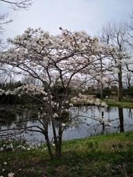 20190430-sapporo-flowers-5