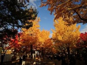 20191011-sapporo-autumn-11