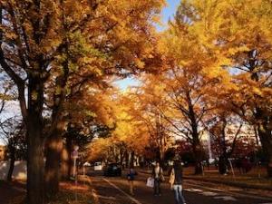 20191011-sapporo-autumn-14