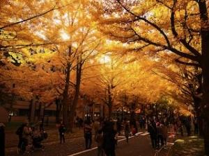 20191011-sapporo-autumn-17