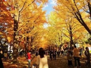 20191011-sapporo-autumn-24