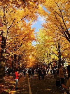 20191011-sapporo-autumn-27