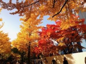 20191011-sapporo-autumn-30