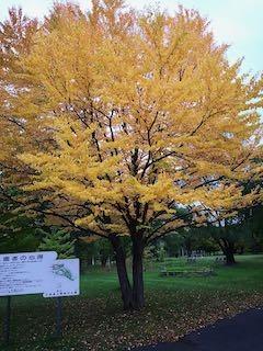 20191011-sapporo-autumn-4