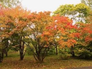 20191011-sapporo-autumn-53