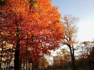 20191011-sapporo-autumn-9