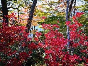 20191021-lake-shikotsuko-10