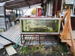20191021-lake-shikotsuko-2