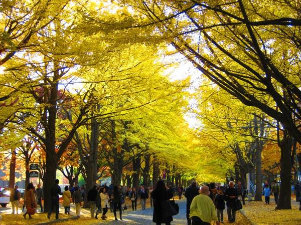 20111103_hokudai2_3