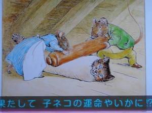 20120707_cat