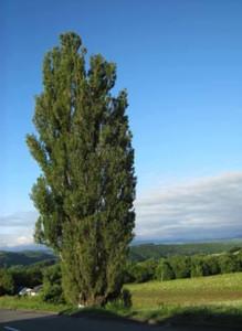 20120717_ken_and_merrys_tree