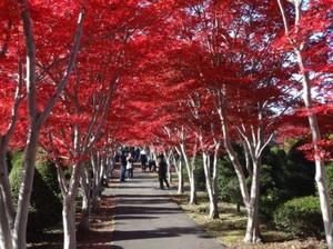 20121111_hiraoka6