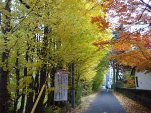 20131102hokudai_autumn1