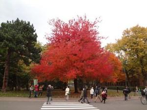 20131102hokudai_autumn2