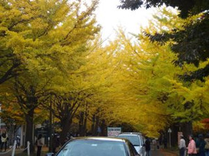20131102hokudai_autumn6