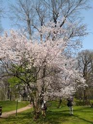 20180430_sapporo_spring_flowers_10