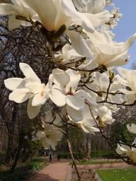 20180430_sapporo_spring_flowers_7