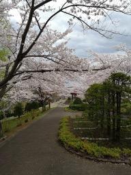 20180504_nakajima_parktemiya_park_3