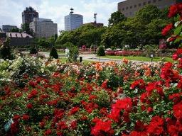 20180630_rose_garden_13