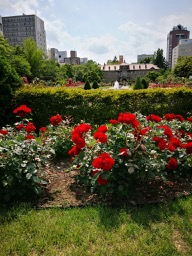 20180630_rose_garden_2