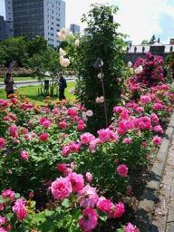 20180630_rose_garden_7