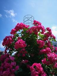 20180630_rose_garden_8